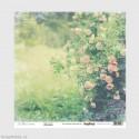 Jednostranný papír - In Bloom - Rose Garden