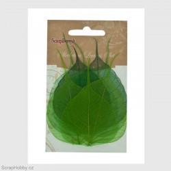 Síťované listy - Zelené - 8ks